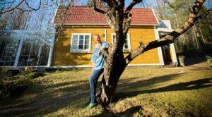 citymaalainen Totte nojailemassa pihapuuhun