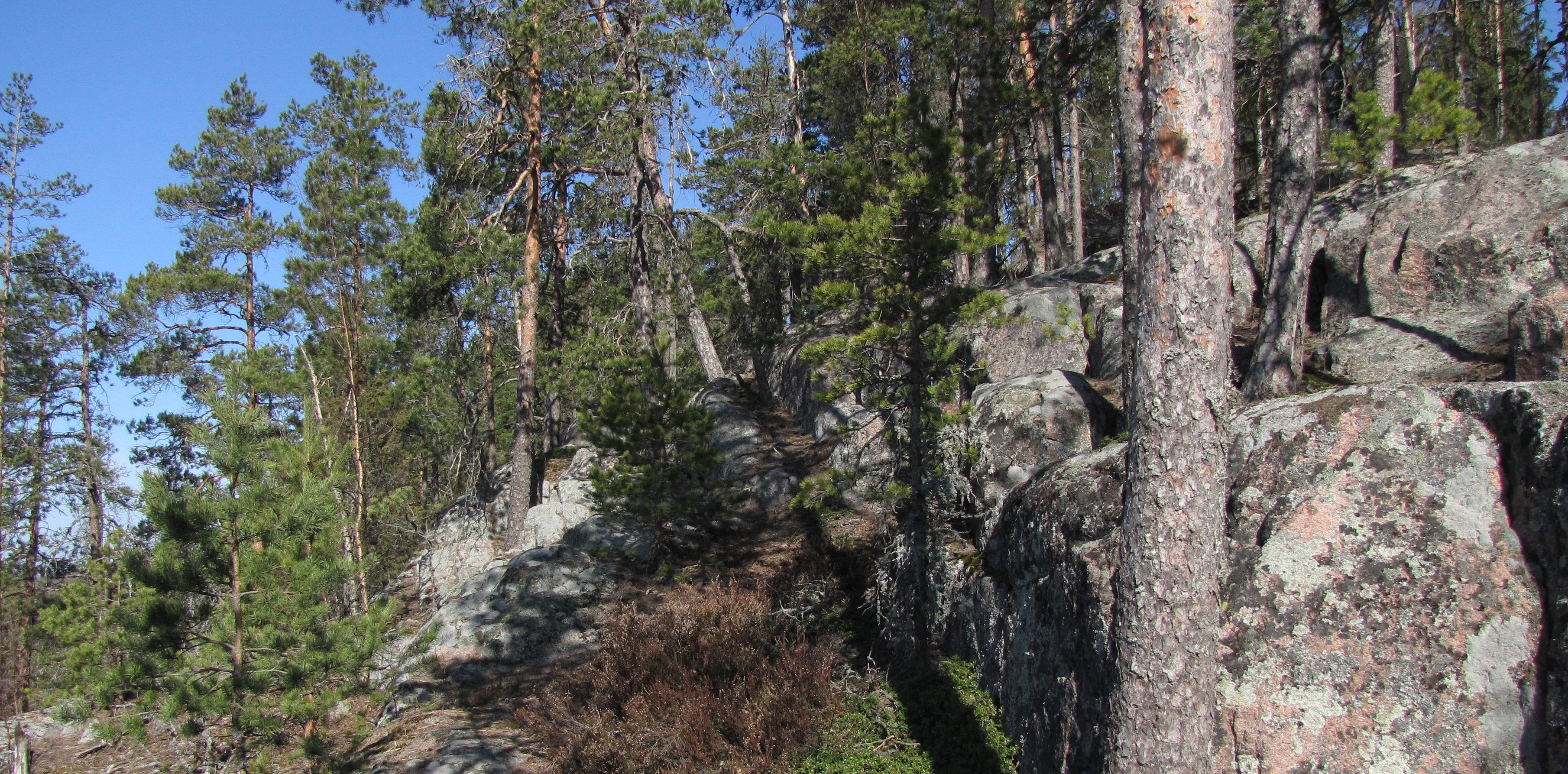 Määkynmäen kalliot Laurinmäen luontopolun varrella