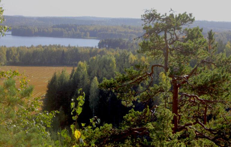 Näkymä Laurinmäen luontopolun varresta Määkynmäeltä