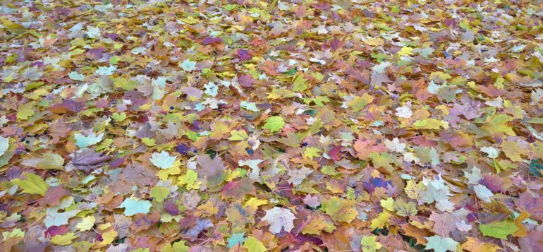 Maahan pudonneet syksyn lehdet.