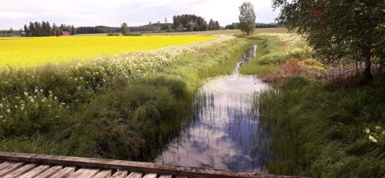 Maalaismaisemaa Tanttalasta, sillan alla virtaa Heinäjoki.