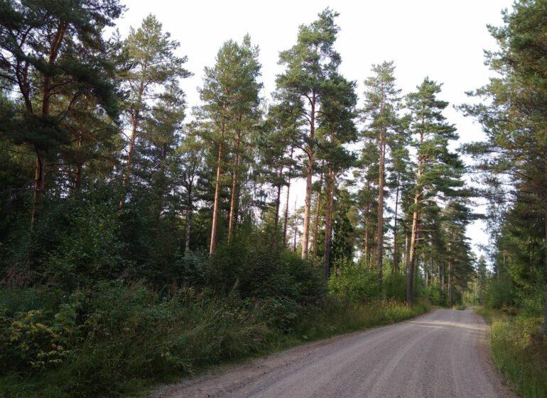 Metsäinen haja-asutusalueen tontti Myllytiellä Vuortenkylässä hiekkatien varrella.